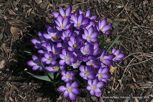 Spring 2009 025