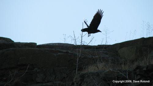 Raven 4-18-09
