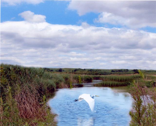 Third Place - Beautiful Lyndhurst Meadowlands - Ernie Fragetta