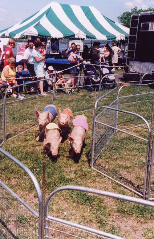 PigsLowRes