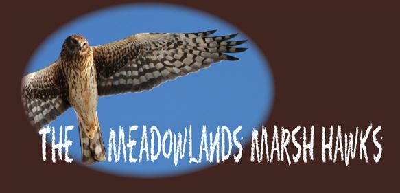 http://meadowblog.typepad.com/.a/6a00e553bb7c208834016302e115b7970d-pi